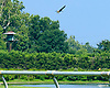 Bald Eagle & Ospreys at Delaware Park on 7/19/17