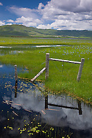 Camas County, Idaho<br /> Centenial Marsh Camas Prairie with fence and cloud reflections at the marsh edge