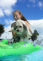 Dog in Togs at the Trust House Recreation Centre swimming pool in Masterton, New Zealand on Sunday, 25 January 2018. Photo: Dave Lintott / lintottphoto.co.nz