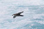 Drake Passage, Southern Ocean, Antarctica