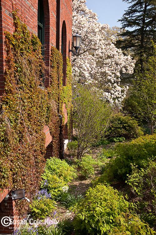 Arnold Arboretum, part of Boston's Emerald Necklace in the Jamaica Plain neighborhood of Boston, MA, USA