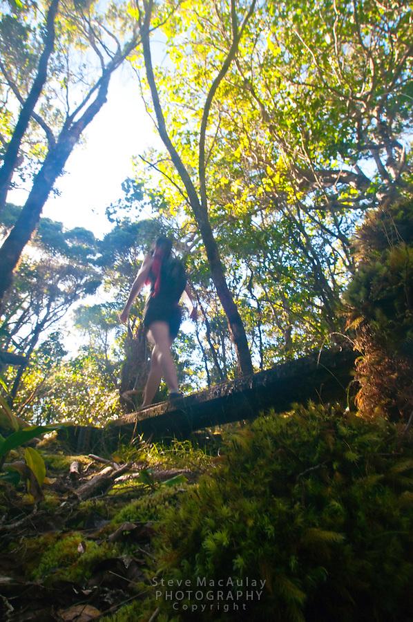 Hiking the Alakai Swamp Trail, Waimea Canyon, Kauai, Hawaii