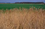 ADD2YC Marshland scenery reclaimed land Suffolk Sandlings near Boyton England. Image shot 2006. Exact date unknown.