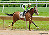 Dancing Afleet winning at Delaware Park on 6/13/13