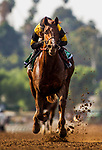 ARCADIA, CA - FEBRUARY 10: Kanthaka #5 with Flavien Prat wins the San Vicente Stakes at Santa Anita Park on February 10, 2018 in Arcadia, California. (Photo by Alex Evers/Eclipse Sportswire/Getty Images)