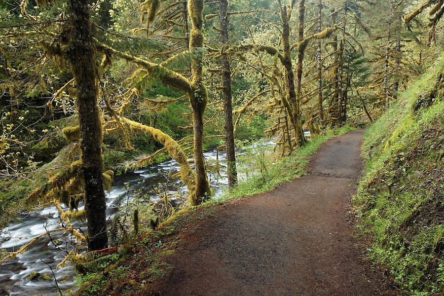 Eagle Creek Trail running along Eagle Creek, Eagle Creek Recreation Area, Columbia River Gorge National Scenic Area, Oregon, USA