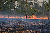 Traditional dry season forest burning. (near Okoki, Cambodia)