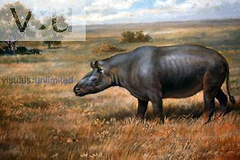 Painting of a Cenozoic Rhinoceros