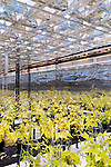 September 9, 2014. Research Triangle Park, North Carolina.<br />  Below the floor of the main greenhouse are climate controlled growth chambers, that are kept within 1/2 to 1 degree of their assigned temperature. Mirrored walls help ensure even light exposure for theses soybeans.<br /> The Syngenta Advanced Crop Lab is nearly one acre of advanced agricultural research under glass. The lab is capable of maintaining many different environments under its roof, allowing scientists to test the effects of various environmental elements on different crops and plants side by side.