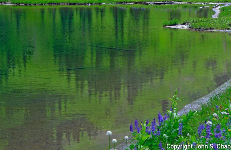 A painterly impression of a forested hillside reflected in a lake bordered by wildflowers. Tipsoo Lakes, Mount Rainier National Park, Washington State.