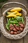 Wicker basket containing freshly grown vegetables, UK