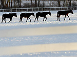 Horses head for the barn as soon set approaches at the Lindy Farms,  Tuesday, January 9, 2018, in Somers. (Jim Michaud / Journal Inquirer)
