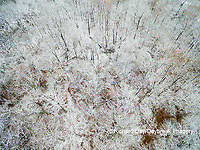 63808-3117 Aerial view of snow covered trees Marion Co. IL