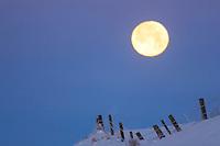 Swan Valley Winter, Full Moon Fence