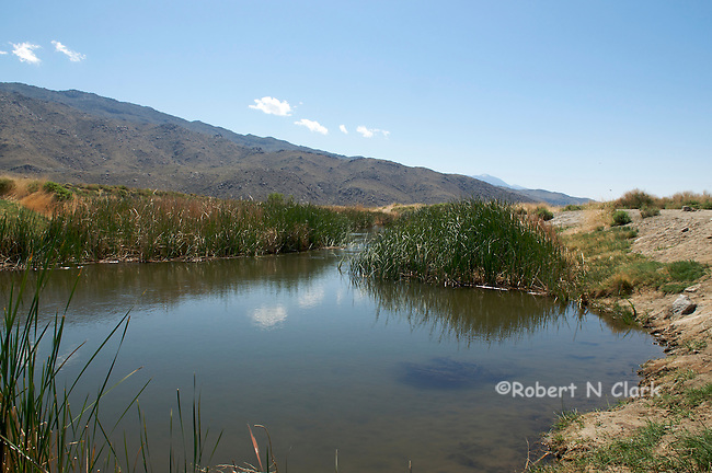 Rewatered section of lower Owens River