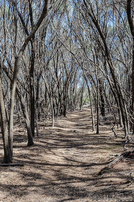 The Isthmus Track in the Freycinet National Park. This is part of a 4-5 hour circuit walk that also visits Wineglass Bay beach.