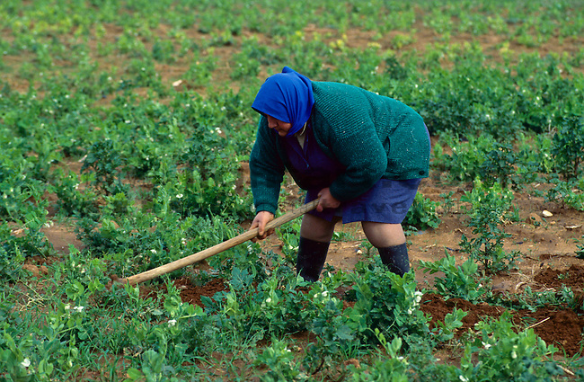 Woman working on field, near Paralimni, Cyprus, Zypern