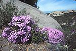 Santa Monica Mountains N.R.A., CA. Scans. Frank Balthis