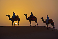 Sunset in the Thar Desert Camels and  Sandunes of Jaisalmer 100 KM from the Pakistan Border, in the Thar desert, Rajasthan India, .The Indian Desert is mainly inhabited by Hindus, Muslims, and Sikhs. The portion in Pakistan is inhabited by primarily by Sindhis and Kolhis. A colorful culture rich in tradition prevails in the desert. The people have a great passion for music and poetry