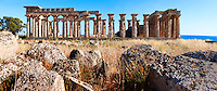 Fallen column drums of Greek Dorik Temple ruins  Selinunte, Sicily photography, pictures, photos, images & fotos. 63 Greek Dorik Temple columns of the ruins of the Temple of Hera, Temple E, Selinunte, Sicily Greek Dorik Temple columns of the ruins of the Temple of Hera, Temple E, Selinunte, Sicily