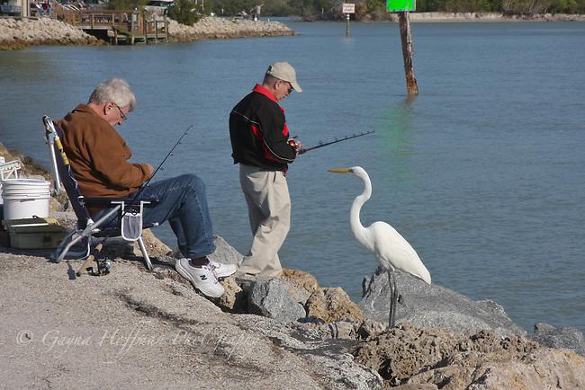 Men fishing off jetty. Nokomis,Florida, White egret.