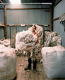 AUSTRALIA, Rawnsley Park Station, the Outback, young man holding sheared sheep wool