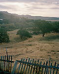 Oak trees and old fence in Hollister, California, USA