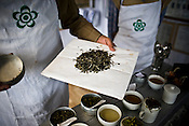 Rajah Banerjee, the owner of Makaibari Tea Estate, lays out Silver Tip Imperial tea leaves for inspection at the Makaibari Tea estate, in Darjeeling, India.