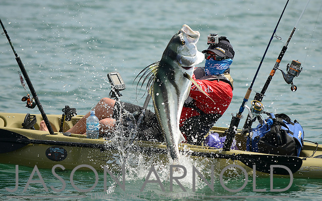 Brandon Cotton of Okuma does hand to fin combat with a large and very green roosterfish while fishing the Tuna Coast of Panama.