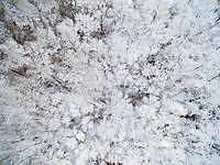 63808-03205 Aerial view of snow covered trees Marion Co. IL