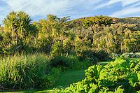 France, Manche (50), Vauville, Jardin botanique du château de Vauville, France, Manche (50), Vauville, la grande pelouse bordée à gauche de cordylines australes (Cordyline Australis) ets le premier rempart au vent marin, à droite les gunnéras (Gunnera manicata) du bassin