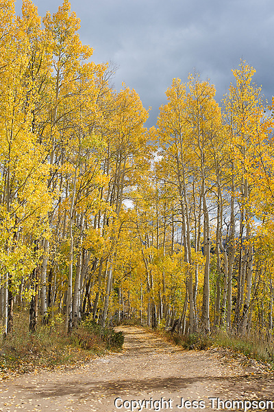 Fall Color Colorado