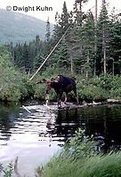 MS01-004z   Moose - Baxter State Park, Maine - Alces alces