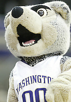 28 February 2009:  Washington Husky mascot Harry entertained the fans during a timeout against Arizona at the Bank of America Arena at Hec Edmundson Pavilion in Seattle, WA.  Washington won 83-78 over  Arizona.