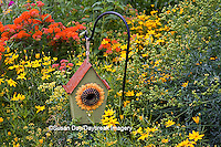63821-205.02 Sunflower birdhouse in garden with Threadleaf Coreopsis (Coreopsis verticillata 'Golden Showers' Common Rue (Ruta graveolens) and Butterfly Milkweed (Asclepias tuberosa)  Marion Co. IL