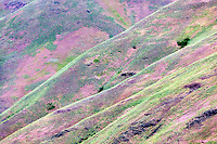 Spring colors in hills in Wallowa County, Oregon.
