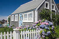 cottage on Old North Wharf with hydrangea, Nantucket, MA