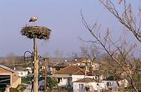 Weiss-Storch, Weissstorch, Weiß-Storch, Weißstorch, Storch, am künstlichen Nest, Nesthilfe in einem Dorf, Ciconia ciconia, white stork