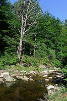 Bach im Karkonowski Nationalpark im Riesengebirge, Woiwodschaft Niederschlesien (Wojew&oacute;dztwo dolnośląskie), Polen, Europa<br /> Creek in Karkonowski National park, Poland, Europe