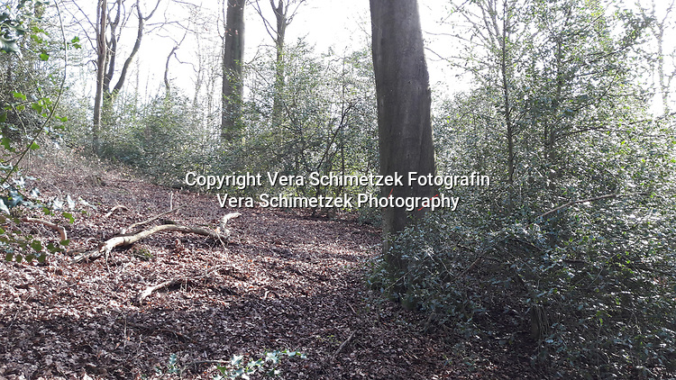 Europe, Germany, Ruhr Area, Ardey, Wetter, Herdecke, Waldbereich vor dem Eingriff<br /> <br /> Europa, Deutschland, Ruhrgebiet, Ardey, Wetter, Herdecke, area before deforestation<br /> <br /> [MODEL RELEASE: NO, Copyright: Vera Schimetzek, Bornstrasse 5, 58300 Wetter, Germany, phone: 0049.2335.970650, mobil: 0049.151.21220918, www.schimetzek-foto.de, schimetzek@web.de,<br /> Die Verwendung des Fotos ist honorarpflichtig. Keine Verwendung ohne Genehmigung.  Es gelten die AGB.<br /> For use the general terms and conditions are mandatory. No use without permission. The use of the image is subject to a fee.]