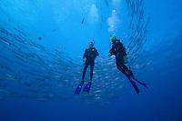 Schooling blackfin barracuda, Sphyraena genie, and divers (MR).  Palau, Micronesia.
