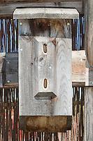 Nistkasten, Nisthilfe für Hornisse, Hornissen, Hornissen-Nest, Hornissennest, Vespa crabro, hornet, brown hornet, European hornet