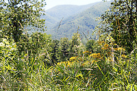 Stock photo: wild grass and plants overlooking a valley and smoky mountain hills in spring.