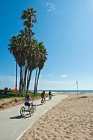 Palm Trees Look Like Mysterious Giant Bird, Venice Beach, CA,  Recreation, SoCal Beach, South Bay, Santa Monica. bay