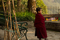 A moment in the day of a little Buddhist Lama monk at a monastery in the Himalayan foothills of Sikkim, India