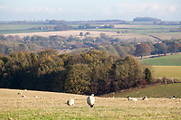 Lincolnshire Wolds<br /> &copy;Tim Scrivener Photographer 07850 303986<br />      ....Covering Agriculture In The UK....