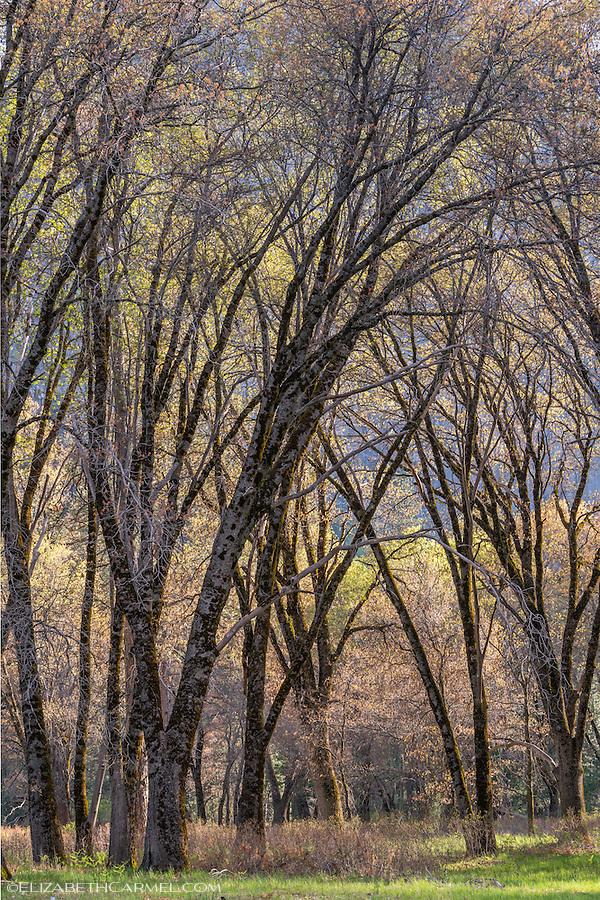 Spring Tapestry, Yosemite
