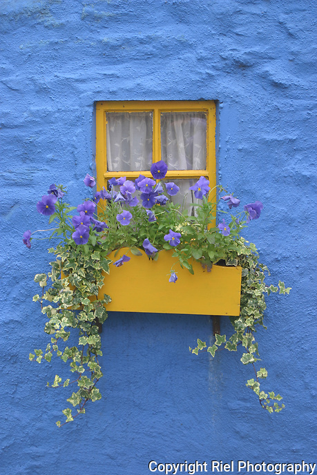 The Irish love their house colors primary and bold. This fisherman's cottage grabs your attention with its blue textured wall, simple yellow flower box and seasonal colors.
