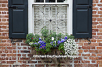 66512-00212 Window box with pansies, snapdragons, and allysum on brick building with blue shutters. Charleston, SC