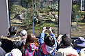 April 1, 2011, Tokyo, Japan - People take pictures of two giant pandas with their cameras and cells phones as the pair makes their debut to the public when Tokyo's Ueno Zoo, closed since the March 11 earthquake, reopens on Friday, April 1, 2011. The pandas - a male named Ri Ri and a female named Shin Shin - were supposed to make their debut on March 22 after arriving from China on Feb. 21, 18 days before a magnitude 9.0 earthquake and tsunami that devastated northeastern Japan. Both pandas also have experienced a magnitude 7.8 quake that struck Sichuan province when they were housed at China Giant Panda Protection and Research Center in May 2008. (Photo by Kaku Kurita/AFLO) [3618] -mis-
